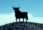 Stier in Andalusien