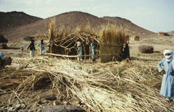 Bau einer Zeriba in Tahifet