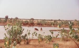 Seenlandschaft in der Nähe von Aleg