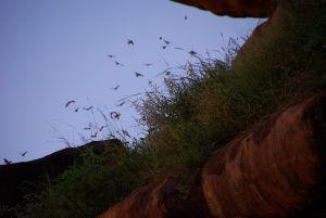 für viele Vögel...