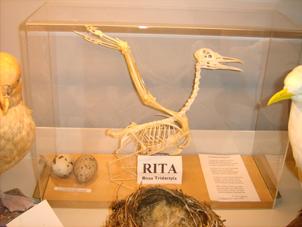 interessante botanische und ornithologische Abteilungen.