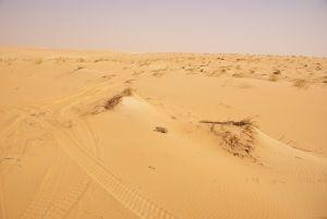 Wir suchen uns den besten Weg durch die Dünen.