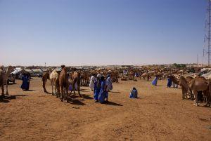 Auf dem Tiermarkt in Nouakschott