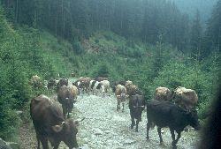 Gegenverkehr bei der Suche nach einem Weg über die Karpaten
