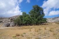 Auf dem Weg zum Nida-Plateau