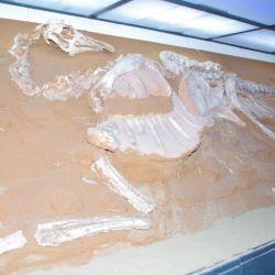 0023085_UB_Dino_Museum_Dino_Platte