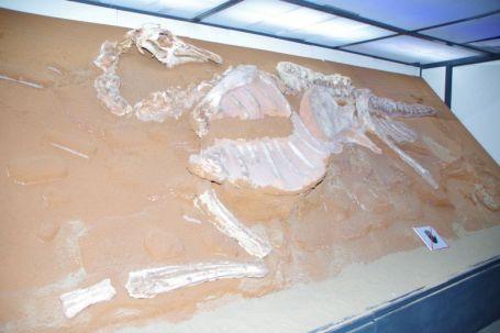 ...von Funden aus der Gobi...