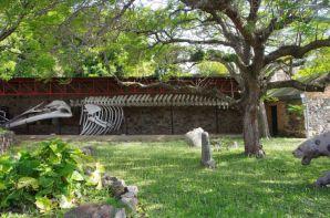 Imposant: Ein Walfisch-Skelett im Museum Municipal