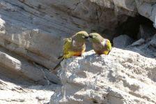 Die geselligen Vögel...