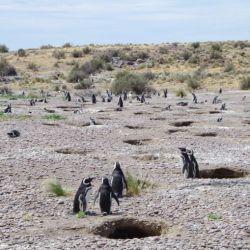 0033022_Magellan-Pinguine_Total_Cabo_dos_Bahias