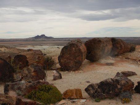 Imposant, diese Baumriesen, mit Maßen bis 1,80m (D), 48m (H) und 150 Mio. Jahre alt. Im Hintergrund der 400m hohe Vulkan Madre e Hijo