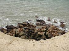 ...bietet ein Refugium für Seerobben und Seelöwen.