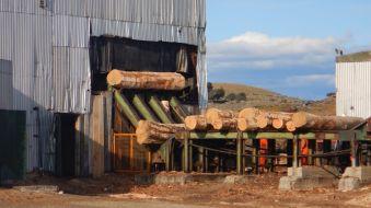 Das Sägewerk von Russfin verarbeitet 18 Stunden/Tag Lenga-Baumstämme.
