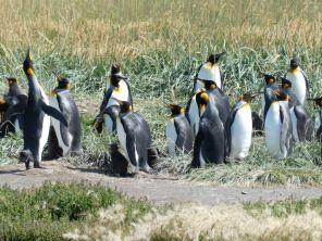 ...außerhalb der Antarktis, ...