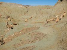 """…finden sich 65 Mio. Jahre alte """"Treibholz-Baumstämme""""…"""
