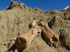 …sowie versteinerte Holzreste im Lehmboden.