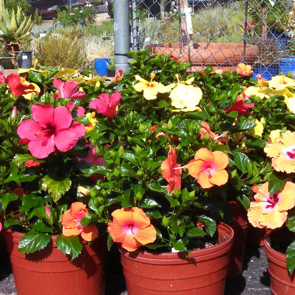 Garden & Nursery Events