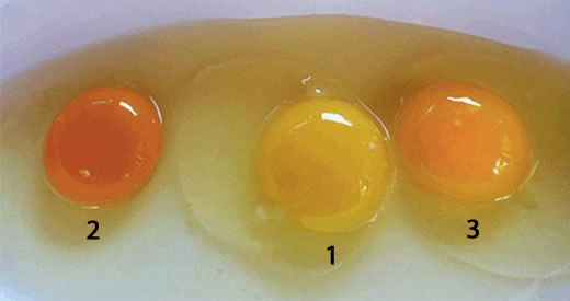 tuorlo uovo qualita