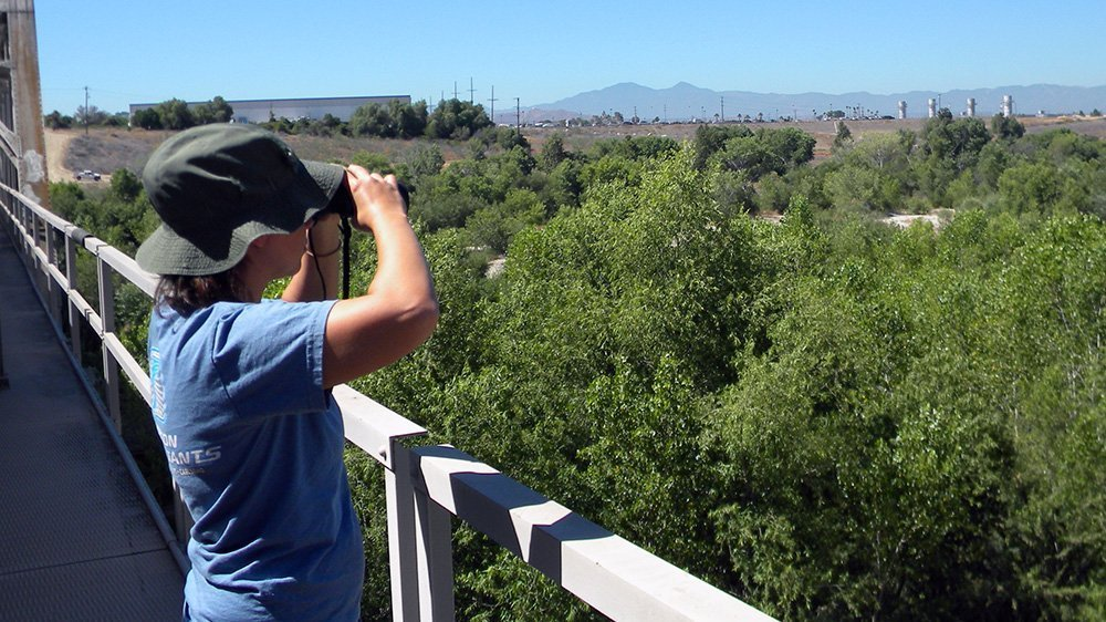 Woman with binoculars looking our at a valley with lots of trees and green vegetation.