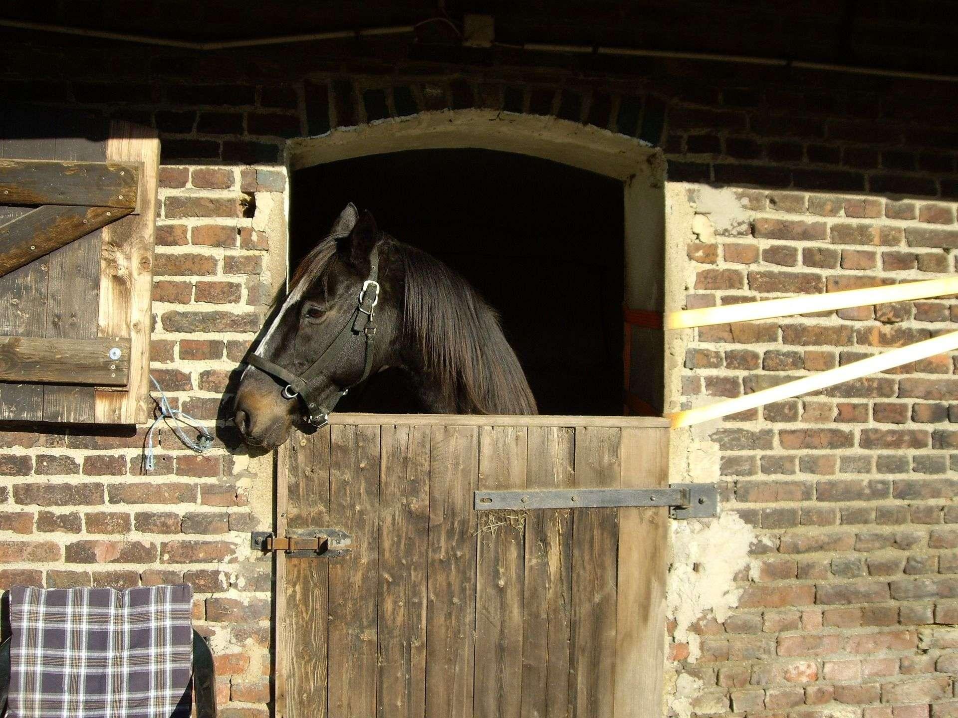 horse-337917_1920