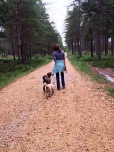Dog Walking - Ringwood Dogs, Ashley Heath on the Hampshire and Dorset border