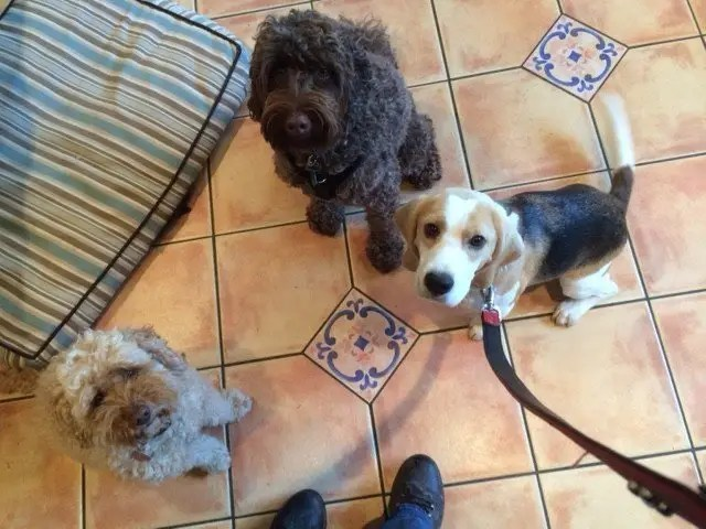 Dog Day Care with Ringwood Dogs, Hampshire