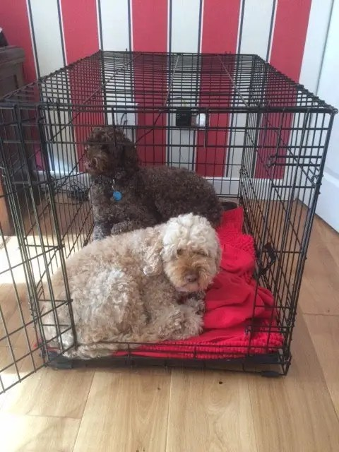 Chilling out and sharing a crate