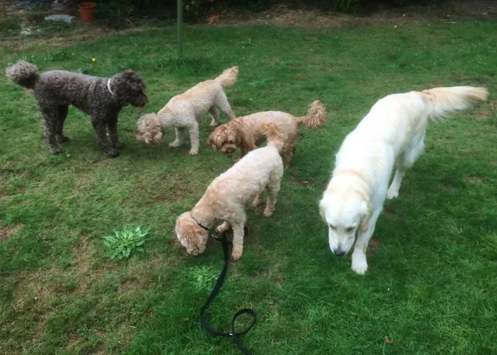 Dog Day Care Dorchester