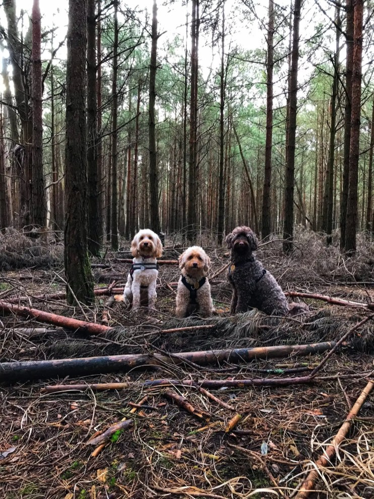 dogs on logs