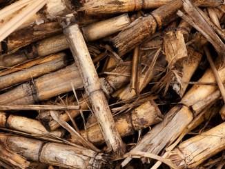 Biomasse, Comitato EBS soddisfatto dell'operato del Governo