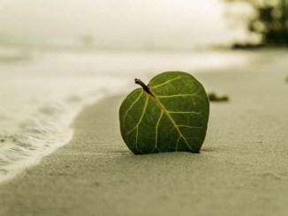 ANIE Federazione e lo sviluppo delle isole minori