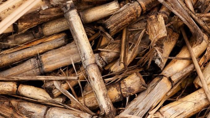 Ecomondo, l'Associazione EBS sostiene la filiera agroenergetica