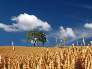 Gli enormi benefici dell'agricoltura conservativa