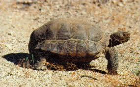Blog 35 Tortoise