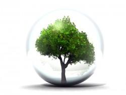 arbre en bulle