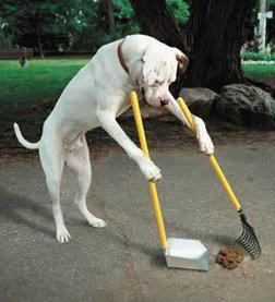 cane-raccoglie-cacca