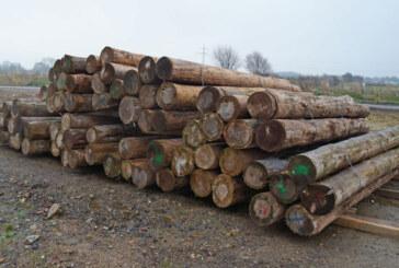 81 Baumstämme vom Bau für guten Zweck zu verkaufen