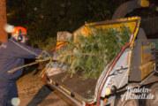 Bald wird wieder im Gänsedorf gehäckselt: 29. Tannenbaumschreddern in Engern