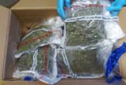 Polizei entdeckt Cannabis-Plantage im Wald bei Hessisch Oldendorf