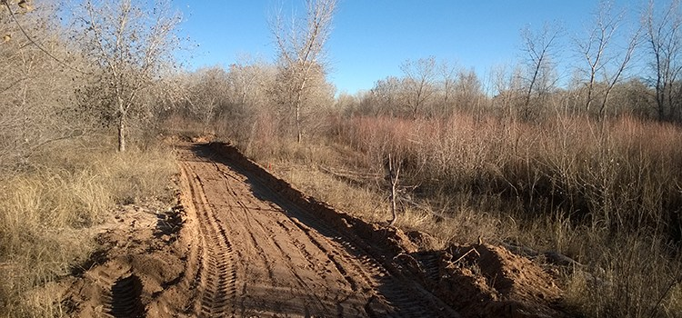 Photo of a plowed path in the Rio Grande Bosque for the Sierra Club Rio Grande Chapter website