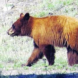 Preventive action reduces bear encounters