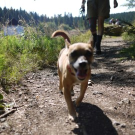 Dogs Welcome on Santa Fe NF, But Owners Have Responsibilities