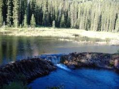 Impressive and massive beaver dam on Snowmass Creek.