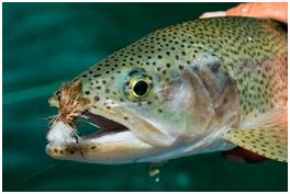 fly fishing argentina