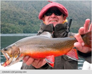 Bright brook trout