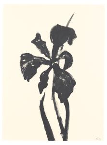 Ellsworth Kelly's <i>Plant Drawings</i>