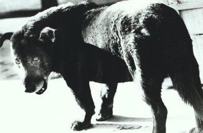 Daido Moriyama's Stray Dog