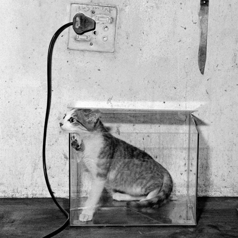 Roger Ballen, Cat in Fish Tank, 2000