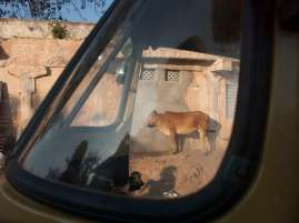 Roadside scene in Southern India.