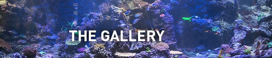 the gallery - aquarium of canada